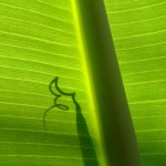 Glashaus_018_tropic web image